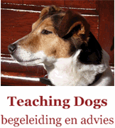 Teaching Dogs