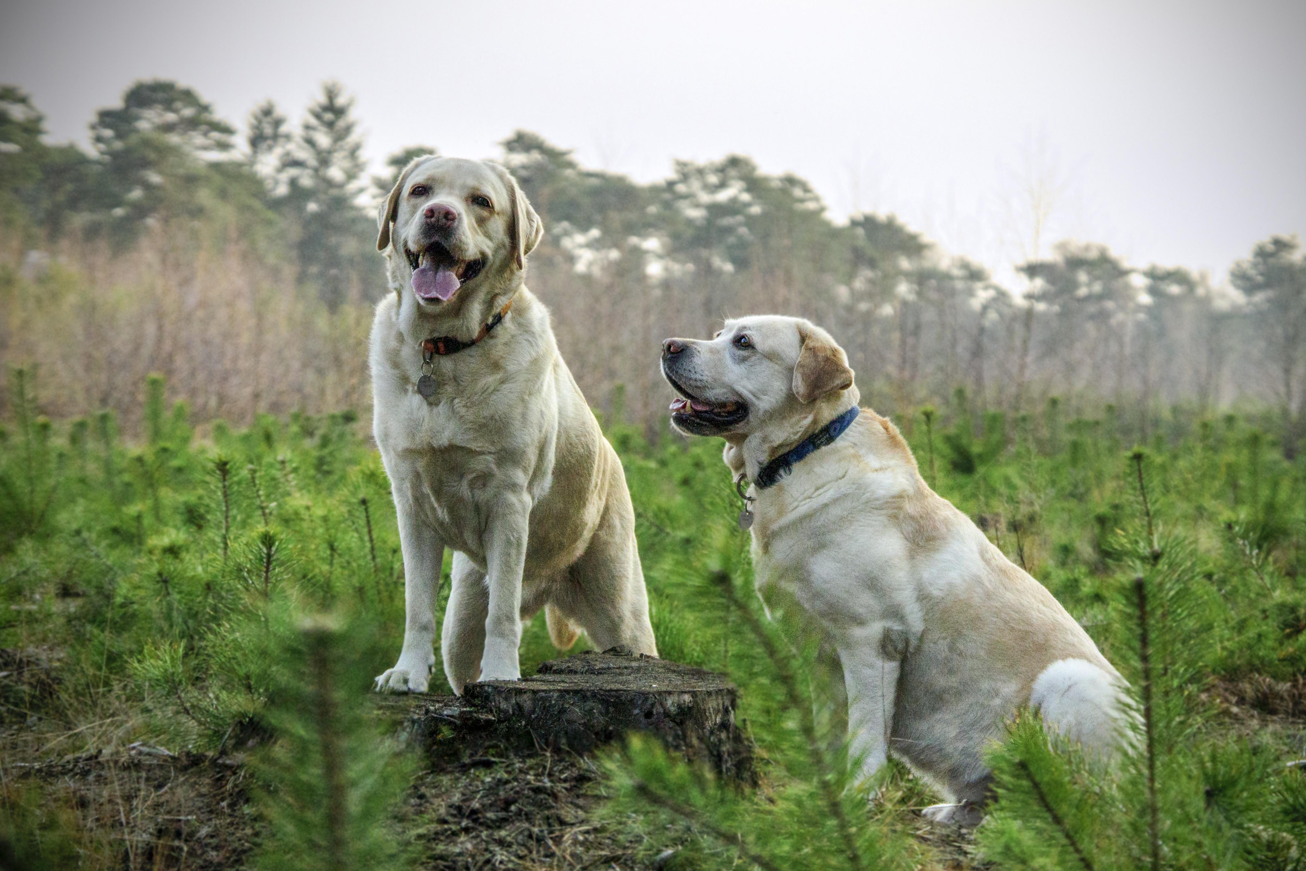 Hondenfluisteraar Utrecht