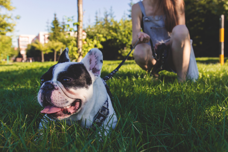 Hondengedragstherapeut Utrecht